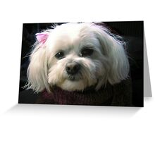 Portrait of Muffy  Greeting Card