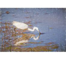 Little Egret (Colour Pencil Effect) Photographic Print