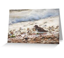 Turnstone (Colour Pencil Effect) Greeting Card