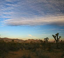 Desert Morning Sky - Joshua Tree by Kat Meezan