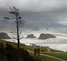 Ecola View by Terry Shumaker