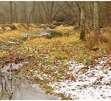 Bear Creek in Winter Photographic Print