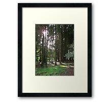 Sunlight Through the Trees at Blarney Castle  Framed Print