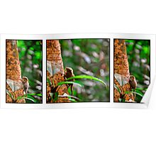 Pygmy Squirrel Trilogy Poster