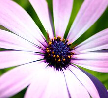Oops a Daisy by Michael  Bermingham