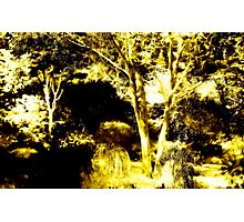 Dingle Garden Photographic Print