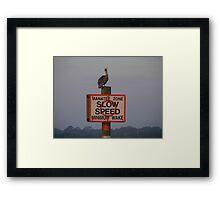 Pelican Police Framed Print