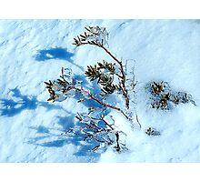 Crystal - Snowy Mountains, NSW Australia Photographic Print