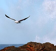 Crescendo of flight by Shaun Caplin