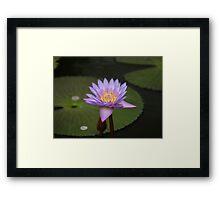 The Eye of the Lotus Framed Print