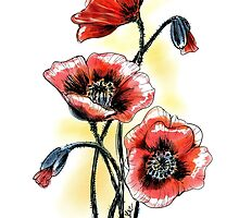 Poppies by alenakaz