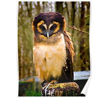 Asian Brown Wood Owl Poster