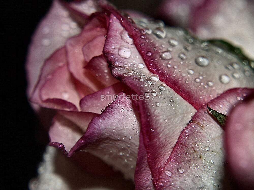 rasberry ripples by smurfette57