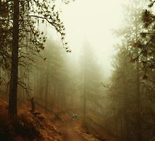 Autumn in Ponderosa Pines Forest by va103