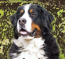 Bernese mountain dog portrait by IowaArtist