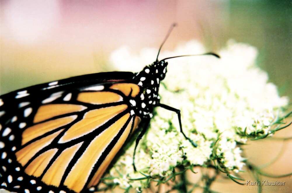 Monarch by Karri Klawiter