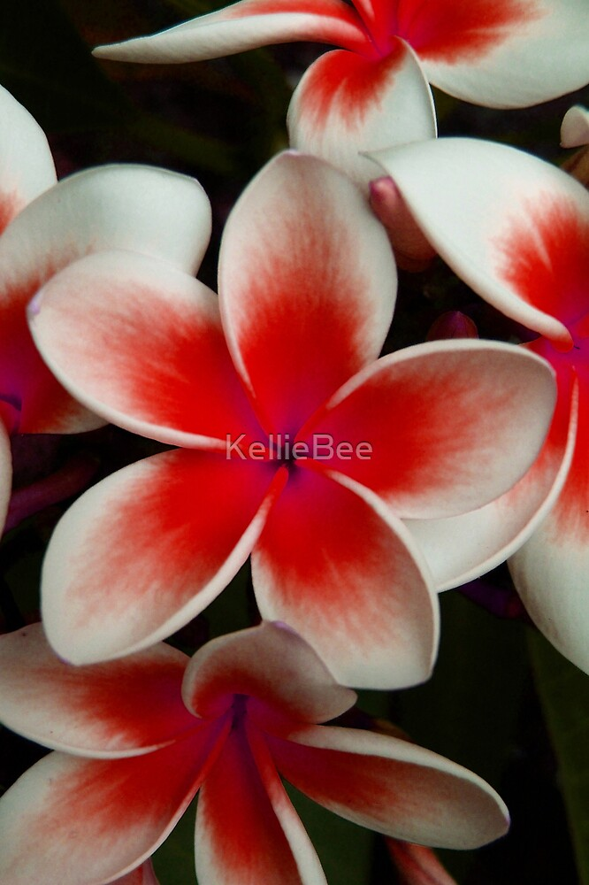 Frangipani Red by KellieBee