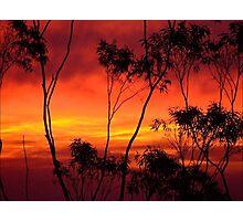 Dawn through the Trees..... Photographic Print