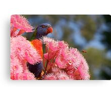 The Bird, the Bee and the Gum Blossoms ~ Rainbow Lorikeet Canvas Print