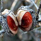 Seed Pod by Mette  Spange