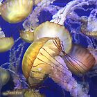 jellyfish by Jenifer