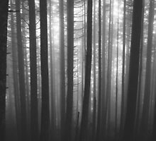 Into the Mist by tonyell