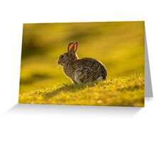 Wildlife Golden Hour Greeting Card