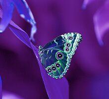 Purple Atmosphere  by Nicole Weil T.