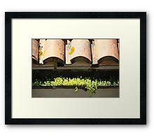 Sedum Framed Print