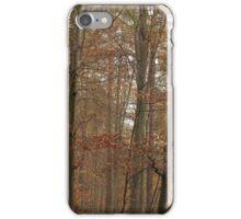 Beech trees in splendid fall color iPhone Case/Skin