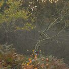 Contrasts of autumn by miradorpictures
