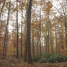 Into the mist of autumn trees by miradorpictures