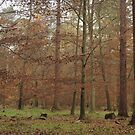 The beauty of autumn in native woodland by miradorpictures