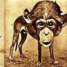 Monkey Business 3. by - nawroski -