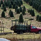 Christmas tree express by KSKphotography