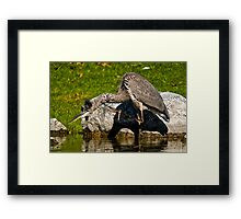 When you have an Itch Framed Print