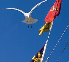 Flying High by kathywaldron
