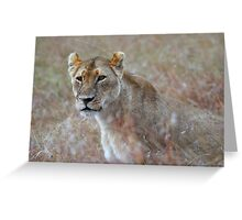 Camouflage: Female Lion Portrait, Maasai Mara, Kenya  Greeting Card