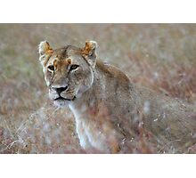 Camouflage: Female Lion Portrait, Maasai Mara, Kenya  Photographic Print