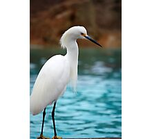 Egret 2 Photographic Print