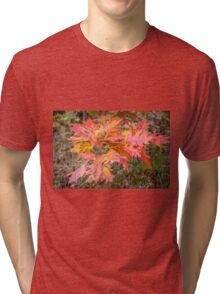 Fall Colors  Tri-blend T-Shirt