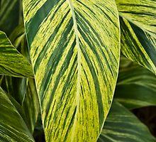 Ginger Plant by Duane Fulk