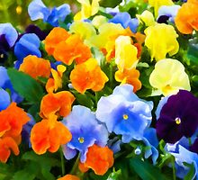 Painted Pansies by Anita Pollak