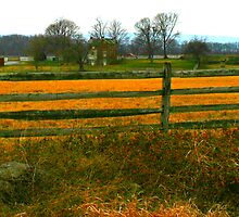 Country by Sharon Ulrich