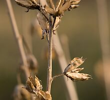 Seed Pods by Duane Fulk