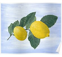 Oil painting of a lemon tree branch with two lemons, isolated on an acrylic painted background Poster