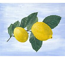 Oil painting of a lemon tree branch with two lemons, isolated on an acrylic painted background Photographic Print