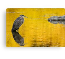 Great Blue Heron at Sunset - Ottawa, Ontario Canvas Print
