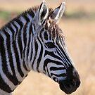 Zebra! by Tokay