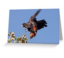 Red-tailed Black Cockatoo - A Splash of Red Greeting Card